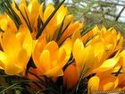 Скачать бесплатно foto Разное Доставка бюджетных цветов 32416002 в Артеме