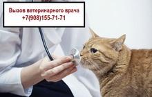 Ветеринарный врач на дом (Арзамас)