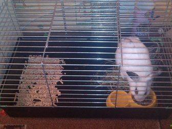 Свежее фото Другие животные декоративный кролик с клеткой 33465570 в Арзамасе