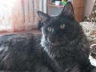 Просмотреть фотографию Вязка Красавец Мейн-кун ищет подругу 38885081 в Барнауле
