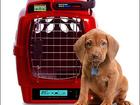 Просмотреть фото  Помощь в отправке животного в любой регион 49679805 в Ростове-на-Дону