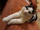 Скачать бесплатно фотографию Отдам даром - приму в дар Подарю замечательного котика! 50703501 в Барнауле