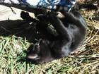 Просмотреть фотографию Отдам даром - приму в дар Отдам красивого котёнка Умку в добрые заботливые руки! 70251894 в Барыше