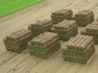 Новое foto Разное Рулонный газон Белгород под заказ 68638379 в Белгороде