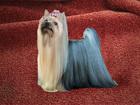 Фотография в   Красивые высокопородные декоративные щенки в Белоярском 25000