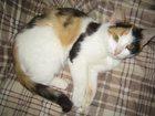 Фото в Кошки и котята Продажа кошек и котят Отдадим в добрые руки молоденькую кошечку в Березниках 0