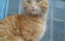 рыжий кот даром