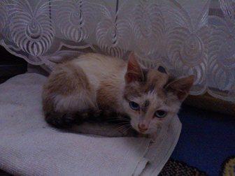 Смотреть foto Отдам даром Отдам котенка 34009473 в Бийске