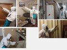Фото в   Профессиональное уничтожение насекомых (тараканов, в Биробиджане 950