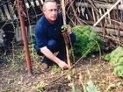 Фотография в Услуги компаний и частных лиц Сельхозработы Реализую рассаду суперкрупноплодной клубники. в Богучаре 150