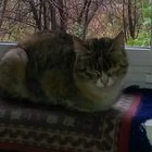 Приюти кошку