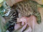 Увидеть изображение Отдам даром Котенок девочка бесплатно в добрые руки 33902594 в Брянске