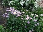 Смотреть foto  Продам садовый участок В СНТ Дружба, собственник 67772575 в Челябинске