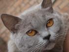 Изображение в   Бывшедомашняя кошечка Лора (1, 5-2 года) в Дмитрове 0