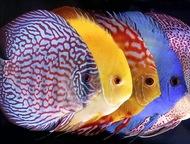 Товары для аквариумистики Основная специализация нашей Аквариумной мастерской -