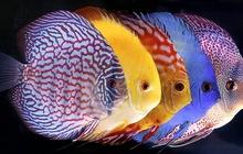 Товары для аквариумистики