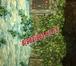 Фотография в Электрика Электрика (услуги) ЭЛЕКТРОМОНТАЖНЫЕ РАБОТЫ. НЕДОРОГО, КАЧЕСТВЕННО в Дмитрове 0