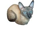 Изображение в Потерянные и Найденные Потерянные пропала кошка, короткая кудрявая шерсть, в Екатеринбурге 0
