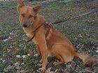 Изображение в Собаки и щенки Продажа собак, щенков Этого малыша отбили у стаи бездомных собак, в Екатеринбурге 0