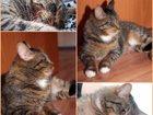 Фотография в Отдам даром - Приму в дар Отдам даром Красивый кот с ласковым характером отдается в Екатеринбурге 0