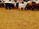 Фото в В контакте Поиск партнеров по бизнесу приглошаю на готовый бизнес животноводстве в Екатеринбурге 1000000
