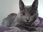 Скачать бесплатно фото Найденные Потерялась кошка, Серая 37006578 в Екатеринбурге