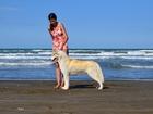 Скачать фото Вязка собак Кобель сибирский хаски для вязок 37571868 в Екатеринбурге