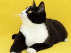 Новое фотографию  Симона, талантливая веселая кошка 2г, 51449102 в Екатеринбурге