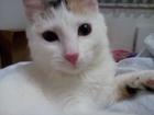 Скачать бесплатно изображение Отдам даром - приму в дар Прекрасная кошечка в дар в связи с аллергией 59585513 в Екатеринбурге