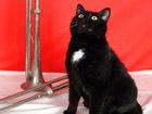 Скачать изображение Отдам даром - приму в дар Котополководец Суворов, черный кот, 1 год 65007349 в Екатеринбурге
