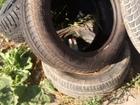Увидеть изображение Другие животные Разная резина много разных 67812760 в Екатеринбурге