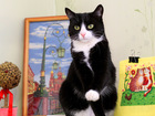 Просмотреть изображение  Гавана, кошка-миниатюра, 5 лет 68968689 в Екатеринбурге