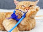 Уникальное foto  Рыжий кот Миндаль, 1,5 года, Крутяцкий! 70153828 в Екатеринбурге