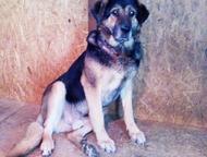 Мухтар - отличный охранник и потрясающий друг семьи В чем сила собаки?  В ее пре