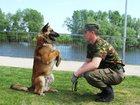 Изображение в   Дрессировка собак по курсу:  НКД (нчальный в Елабуге 900