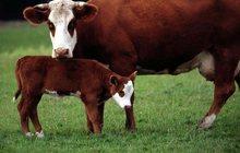 Молочные продукты с фермы