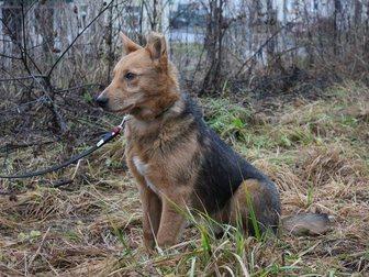 Новое фотографию Продажа собак, щенков Малыш Арчи ждет добрые руки и теплый дом! 34345012 в Гатчине