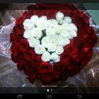 цветы, комнатные растения,подарки