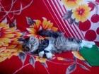 Скачать фото Приюты для животных Отдам кота в добрые руки 39405784 в Хабаровске