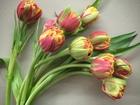 Скачать бесплатно фото Растения Тюльпаны оптом Хабаровск – прямая поставка из Голландиив Хабаровске 55223269 в Хабаровске
