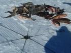 Смотреть фото  Рыболовные хапуги, хлопушки пружинные 76114917 в Хабаровске