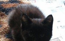 Красивые котята даром
