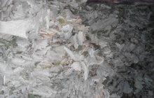 Продам веники дубовые банные(добрые)