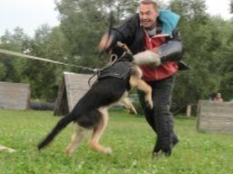 Увидеть фото Услуги для животных Дрессировка собак, 33421601 в Хабаровске
