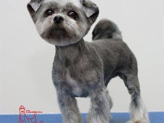Увидеть фотографию  Стрижка собак и кошек в Хабаровске 33987370 в Хабаровске