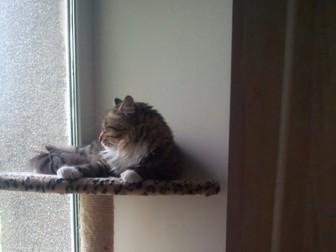 Просмотреть фотографию Приюты для животных Отдам кота в добрые руки 39405784 в Хабаровске