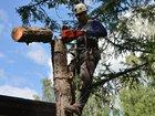 Свежее фотографию  Удаление деревьев любой сложности, 69803985 в Химки