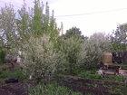 Увидеть фото Сады Срочно! Продам сад 7 соток 38996200 в Ишимбае