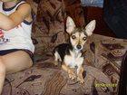 Изображение в Собаки и щенки Продажа собак, щенков НОЧЬЮ С 03. 07. 2015 Г. НА 04. 07. 2015 Г. в Искитиме 0
