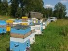 Фотография в Домашние животные Другие животные Продам на высадку 20 пчелосемей в Искитимском в Искитиме 3000